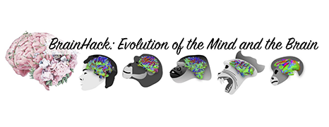 Brainhack in Padova: Evolution